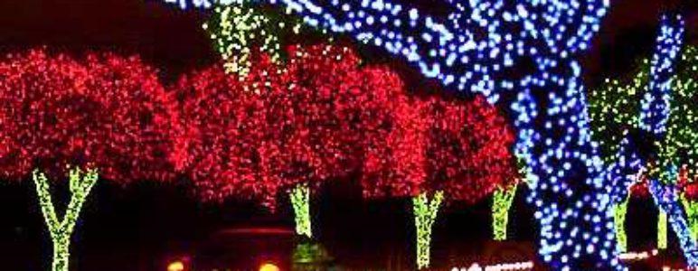 fantasy-of-lights-broward2